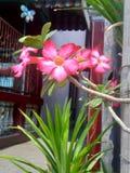 De natuurlijke rode bloemen stroomt stock afbeelding