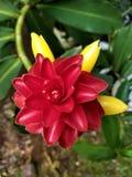 De natuurlijke rood en gele textuur van de bloemwas royalty-vrije stock afbeeldingen
