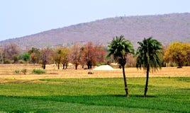 De natuurlijke schoonheid van het landbouwgrondlandschap Stock Foto's