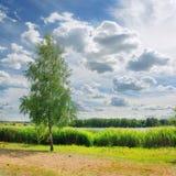 De natuurlijke toneelaard van de landschapszomer met boom op groene kust van meer tegen bewolkte blauwe hemel Royalty-vrije Stock Foto's