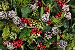 De natuurlijke Winter Flora Background royalty-vrije stock afbeelding