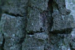 De Natuurlijke zuivere textuur van een boom stock fotografie