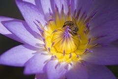 De nectar van het leven Stock Afbeelding