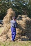 De Nederlandse landbouwer is ambacht verzamelend hooi aan een hooiberg Stock Foto's