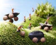 De neerstorting van de auto bij mierenrassen, mierenverhalen Stock Fotografie