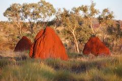De nesten van de termiet Stock Afbeeldingen