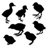 De nestvogel van het silhouet royalty-vrije illustratie