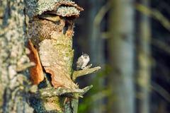 De nestvogel van de vogel is dichtbij het nest in het bos in s stock foto