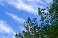 De nette bovenkant op een blauwe hemelachtergrond Royalty-vrije Stock Foto's