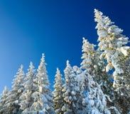 De nette bovenkanten van de winter (de achtergrond van Kerstmis) Royalty-vrije Stock Foto's