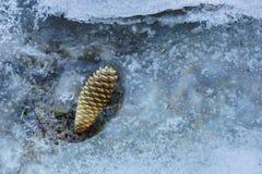 De nette kegel in het bos bevroor in het ijs stock foto's