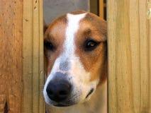 De Neus van de hond Stock Fotografie