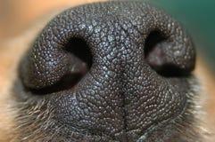 De neus van de hond Stock Afbeeldingen