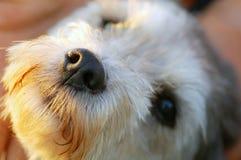 De neus van de hond stock foto's