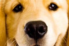 De Neus van de Hond van het puppy stock afbeelding