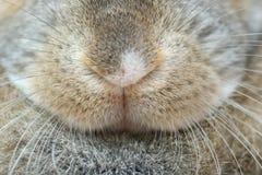 De neus van het konijn Royalty-vrije Stock Fotografie