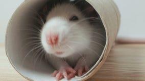 De neus van de muis sluit stock footage