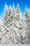 De nevelige bosmening van de de winterspar Royalty-vrije Stock Foto