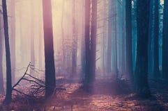 De nevelige donkere bos Enge bosachtergrond van Halloween voor Halloween Royalty-vrije Stock Foto