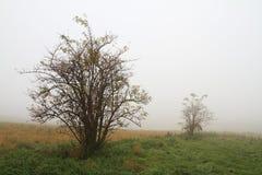 De nevelige herfst Stock Afbeelding