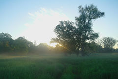 De nevelige weidelente bij zonsopgang Stock Foto
