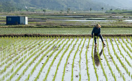 De nevelinsecticide van de landbouwer royalty-vrije stock foto's