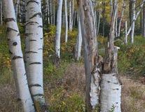 De New Hampshire; Montañas blancas en otoño Fotografía de archivo