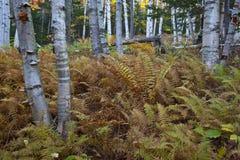 De New Hampshire; Montañas blancas en otoño Imagenes de archivo