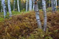 De New Hampshire; Montañas blancas en otoño Fotografía de archivo libre de regalías