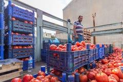De niet geïdentificeerde Turkse mens verkoopt tomaten in plastic kratten stock afbeelding