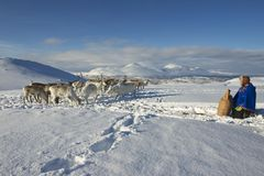 De niet geïdentificeerde Saami-mens brengt voedsel aan rendieren in de diepe sneeuwwinter, Tromso-gebied, Noordelijk Noorwegen Royalty-vrije Stock Foto