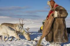 De niet geïdentificeerde Saami-mens voedt rendieren in ruwe de wintervoorwaarden, Tromso-gebied, Noordelijk Noorwegen Stock Afbeelding