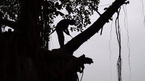 De niet identificeerbare tak van jonge mensenbesnoeiingen bovenop een grote boom stock video