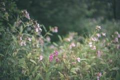 de niet specifieke details van het aard bosbed van gebladerte - uitstekende retro ziet eruit stock foto