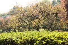 De nieuwe bladeren groeien in de lente Royalty-vrije Stock Fotografie