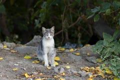 is de nieuwe foto van 2018, aanbiddelijke grijze verdwaalde kat slaperig royalty-vrije stock afbeeldingen