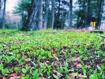 De nieuwe groei van grond in de vroege lente stock fotografie