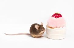 De nieuwsgierige bruine binnenlandse muis onderzoekt pluche cupcake Royalty-vrije Stock Afbeelding