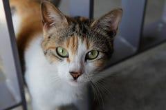 De nieuwsgierige kat is het staren camera bij donkere hoek Royalty-vrije Stock Afbeelding