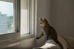 De nieuwsgierige kattenzitting op de bank let op wat buiten gebeurt royalty-vrije stock foto