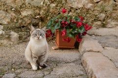 De nieuwsgierige uitdrukking van een tedere kat royalty-vrije stock fotografie