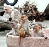 De nieuwsgierigheid doodde de aap Royalty-vrije Stock Foto