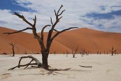 Deadvlei landskap, Sossusvlei, Namibia Royaltyfri Bild