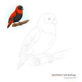 De noordelijke rode bischopvogel leert om vector te trekken Stock Afbeeldingen