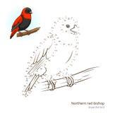 De noordelijke rode bischopvogel leert om vector te trekken Royalty-vrije Stock Foto