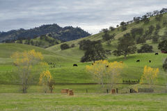 De noordelijke Westelijke Uitlopers van Californië Royalty-vrije Stock Foto's