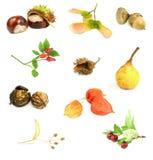 De noten, de zaden, en de vruchten van de herfst Stock Afbeeldingen