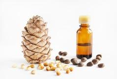 De noten en de olie van de ceder Royalty-vrije Stock Afbeeldingen