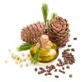 De noten en de olie van de cederpijnboom Stock Afbeeldingen