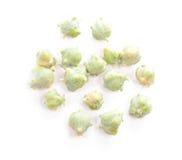 De noten van de cipres. stock foto's